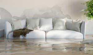 Что делать если квартире сырость, влажность, плесень и грибки