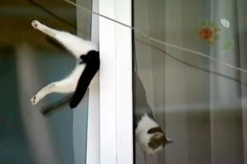 проветривание окна