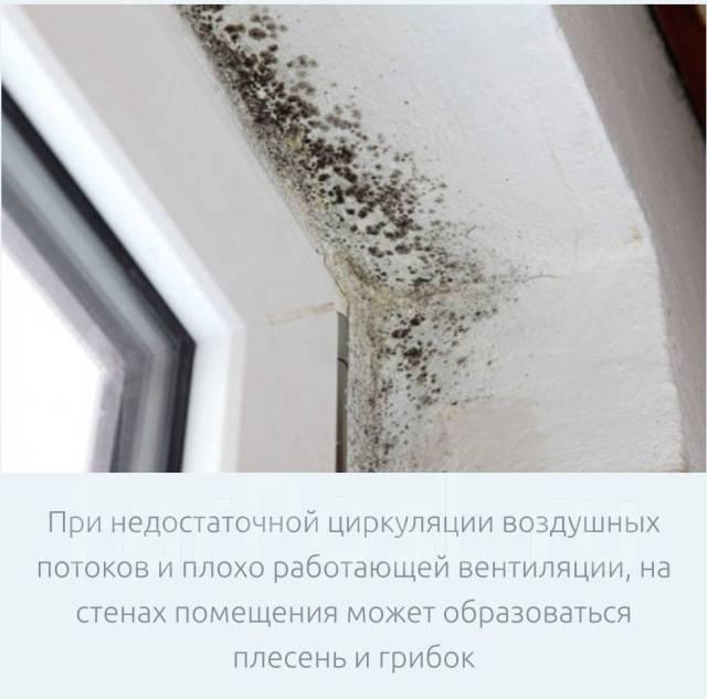 грибок на окне
