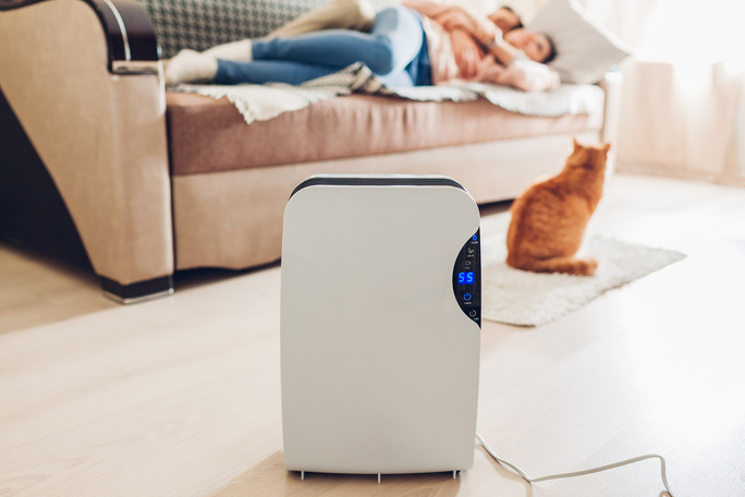 Осушитель воздуха в квартире с людьми и котом
