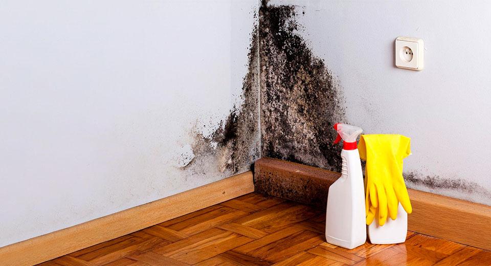 Грибок на стене и химическое средство для уборки